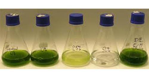 盐藻的功效